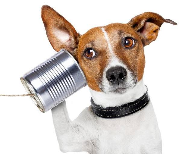 comunicazione-canina.jpg